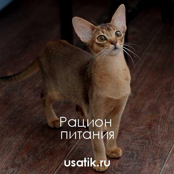 Рацион питания абиссинских кошек