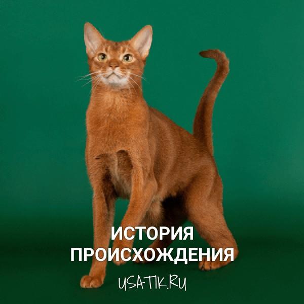 История происхождения абиссинских кошек