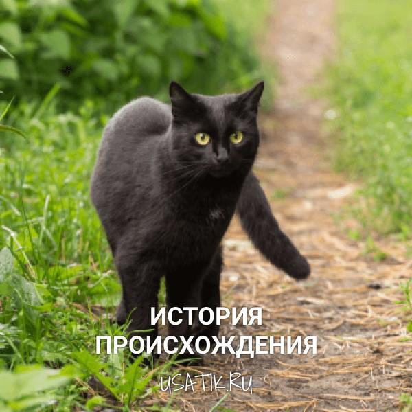 История происхождения бомбейских кошек