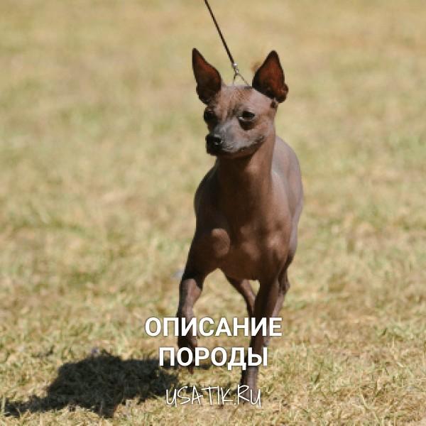Ксолоитцкуинтли - описание породы