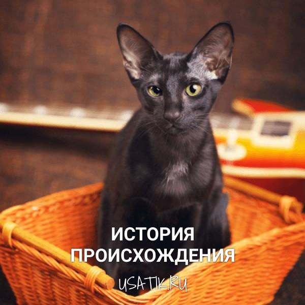 История происхождения ориентальных кошек