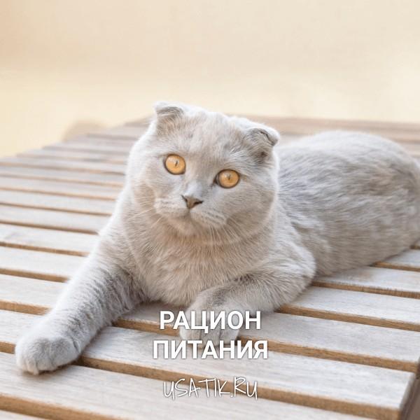 Рацион питания шотландских вислоухих кошек