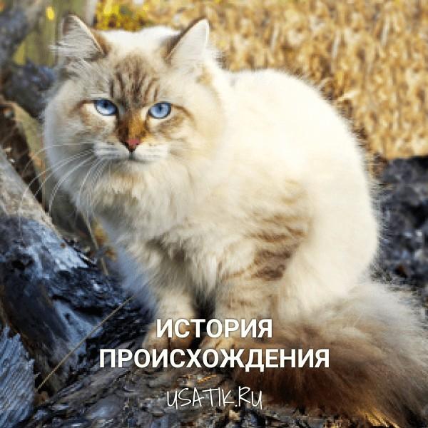 История происхождения невских маскарадных кошек