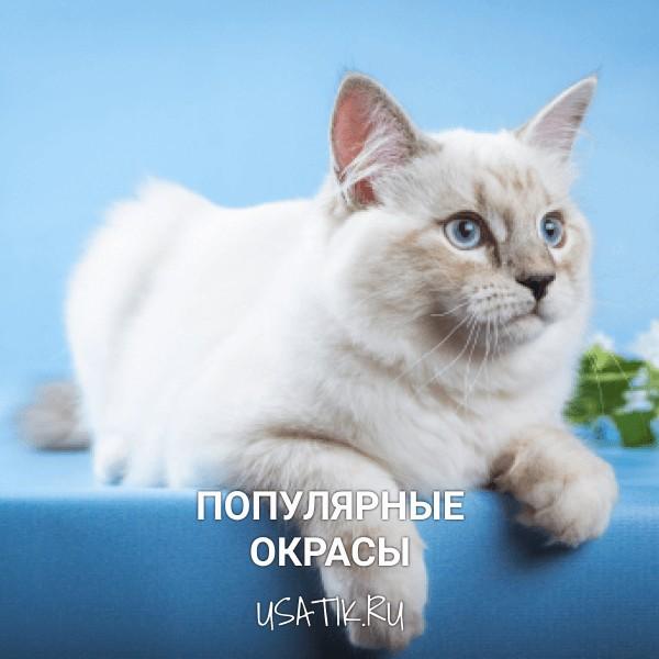 Популярные окрасы невских маскарадных кошек