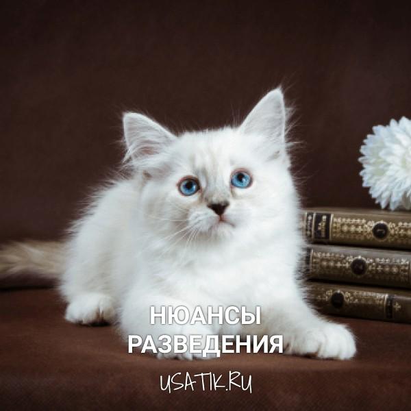 Разведение невских маскарадных кошек