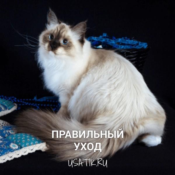 Уход за невскими маскарадными кошками