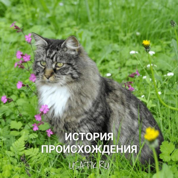 История происхождения норвежских лесных кошек
