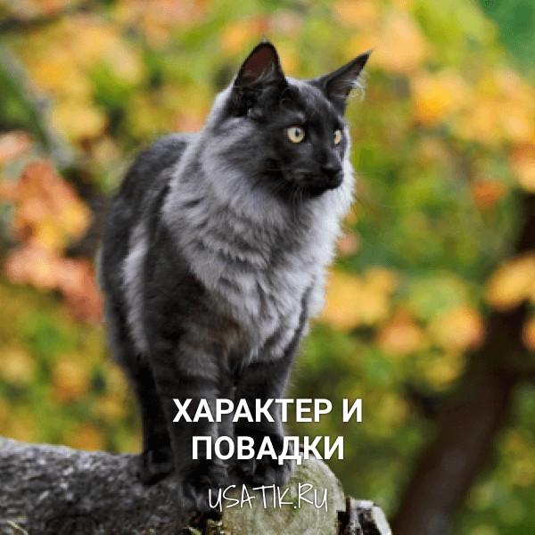 Характер и повадки норвежских лесных кошек