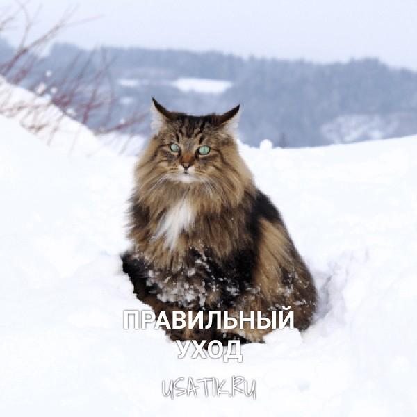 Уход за норвежскими лесными кошками