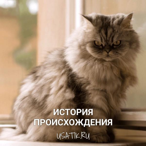 История происхождения персидских кошек