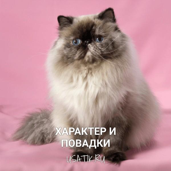 Характер и повадки персидских кошек