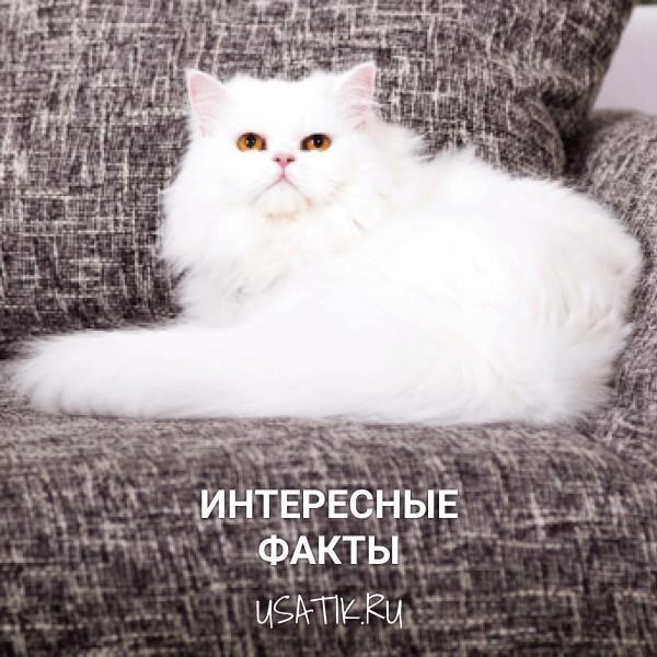Интересные факты о персидских кошках