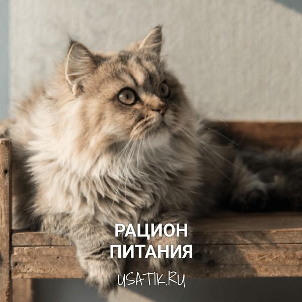 Рацион питания персидских кошек