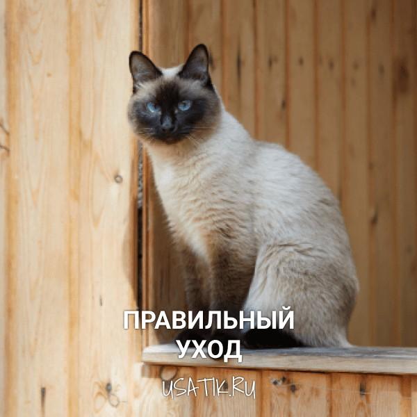 Уход за сиамскими кошками