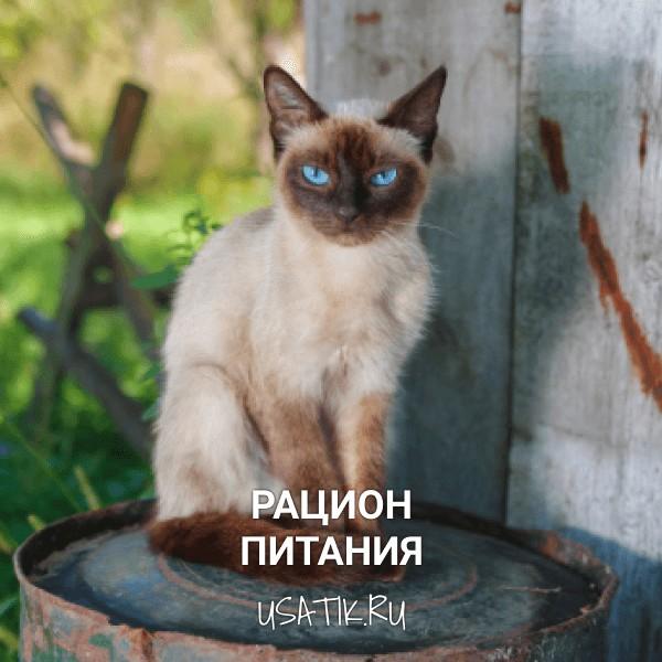 Рацион питания сиамских кошек