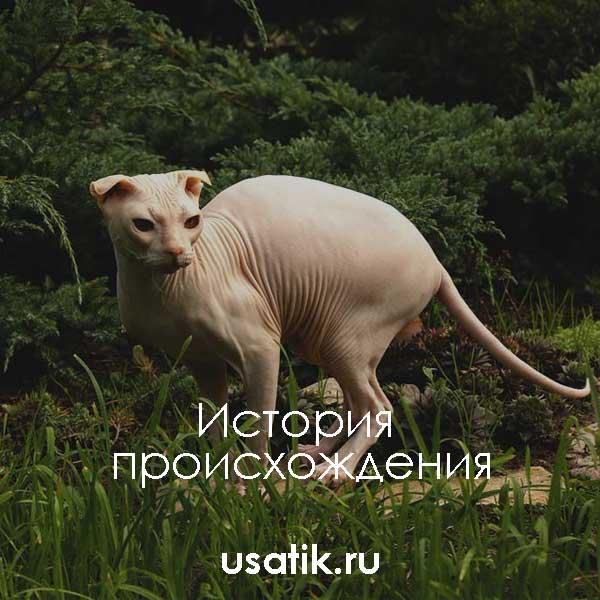 История происхождения украинских левкоев