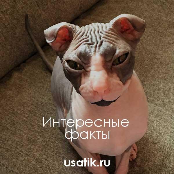 Интересные факты об украинских левкоях