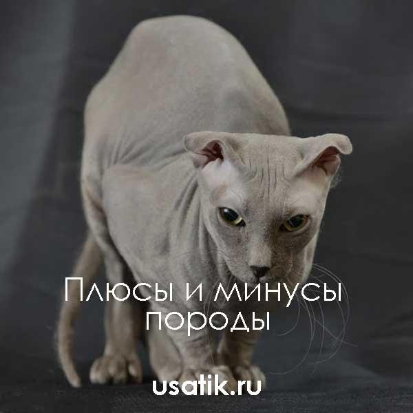 Плюсы и минусы украинских левкоев