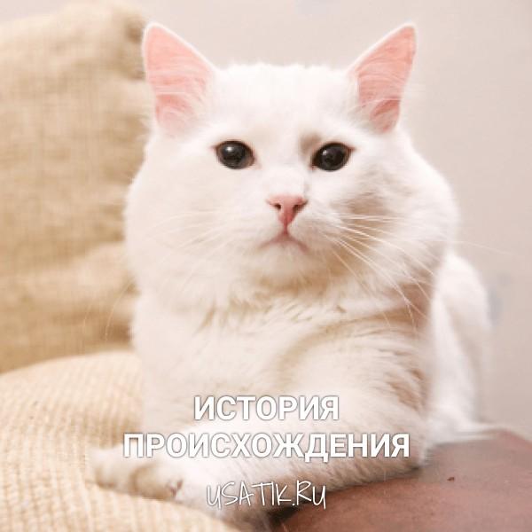 История происхождения ангорских кошек