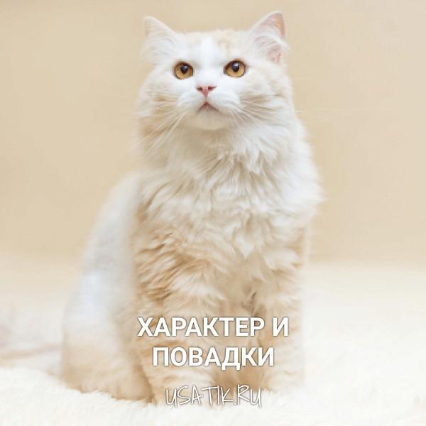 Характер и повадки ангорских кошек