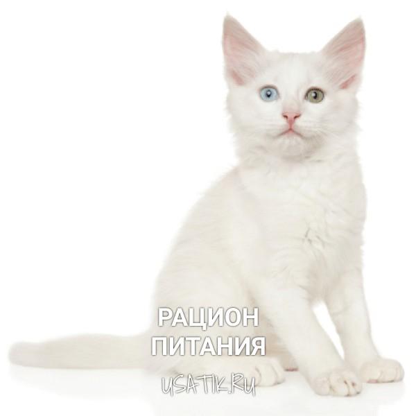 Рацион питания ангорских кошек