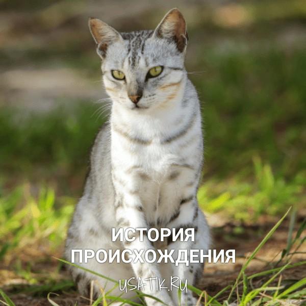 История происхождения египетских кошек