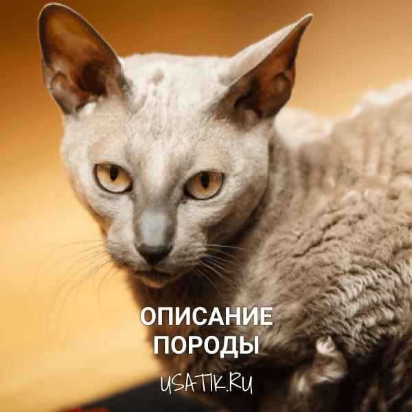 Египетская кошка - описание породы