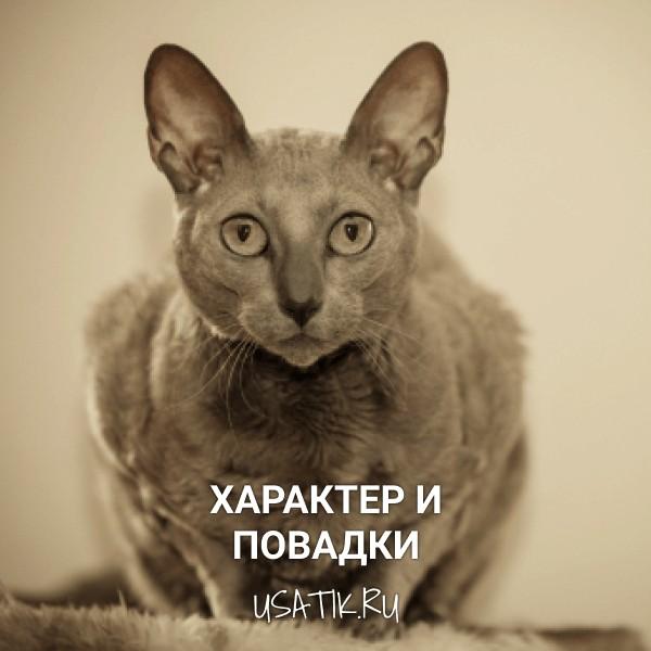 Характер и повадки египетских кошек
