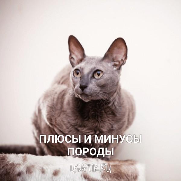 Плюсы и минусы египетских кошек