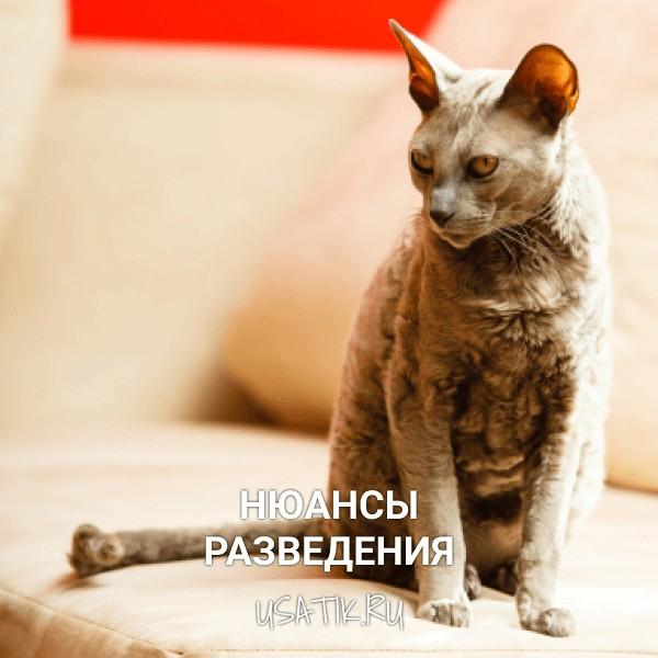 Разведение египетских кошек
