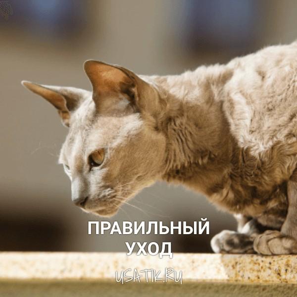 Уход за египетскими кошками