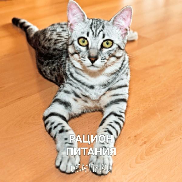 Рацион питания египетских кошек