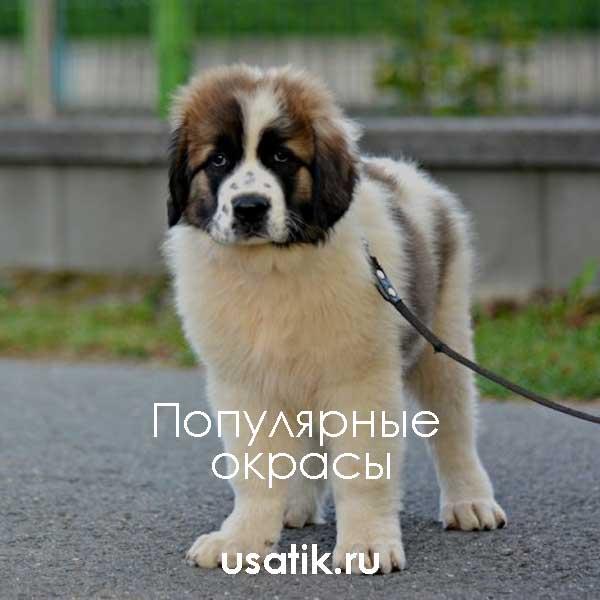 Популярные окрасы московских сторожевых