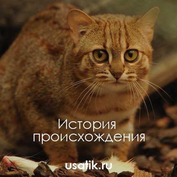 История происхождения ржавых кошек