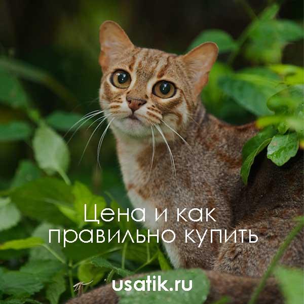 Ржавая кошка - цена и как правильно купить