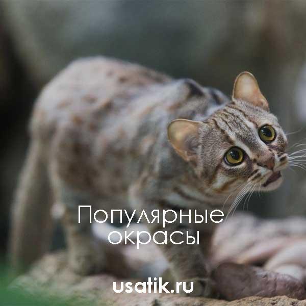 Популярные окрасы ржавых кошек