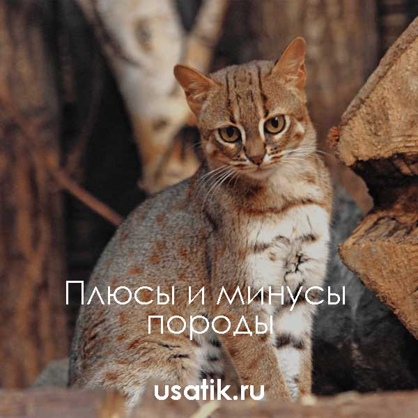 Плюсы и минусы ржавых кошек