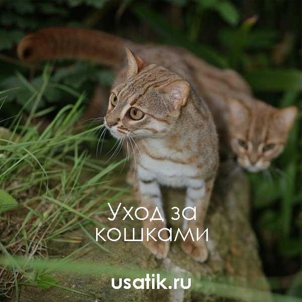 Уход за ржавыми кошками