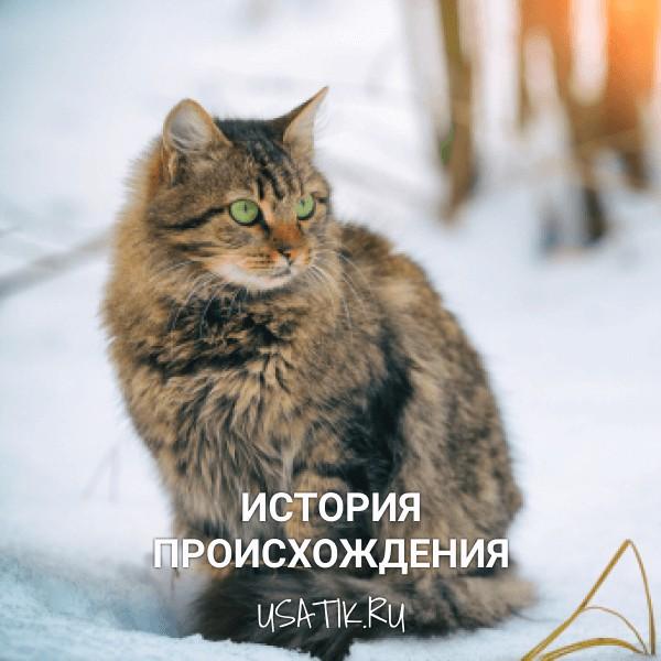 История происхождения сибирских кошек