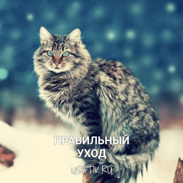 Уход за сибирскими кошками