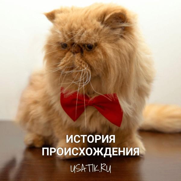 История происхождения экзотических кошек