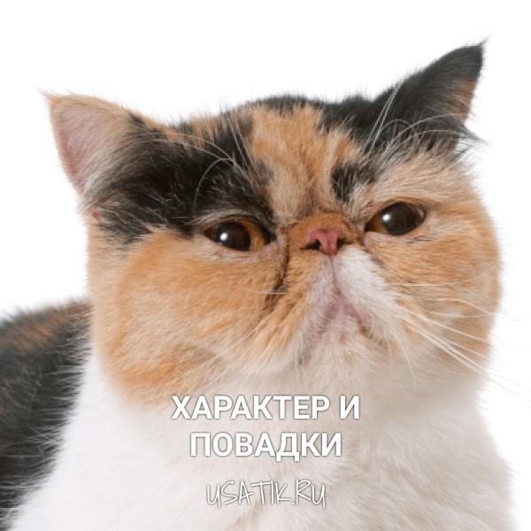 Характер и повадки экзотических кошек