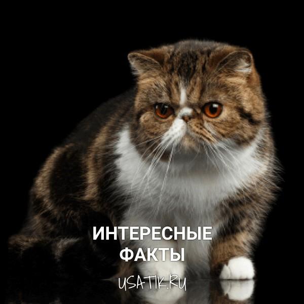 Интересные факты об экзотических кошках