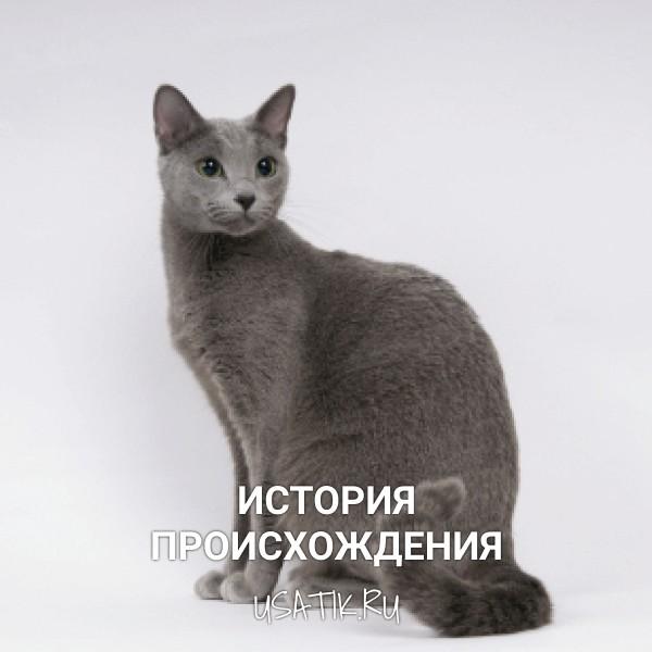 История происхождениярусских голубых кошек