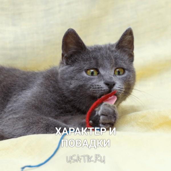 Характер и повадки русских голубых кошек