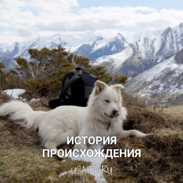 История происхождения пиренейских горных собак