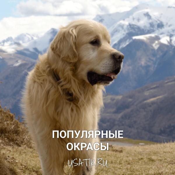 Популярные окрасы пиренейских горных собак