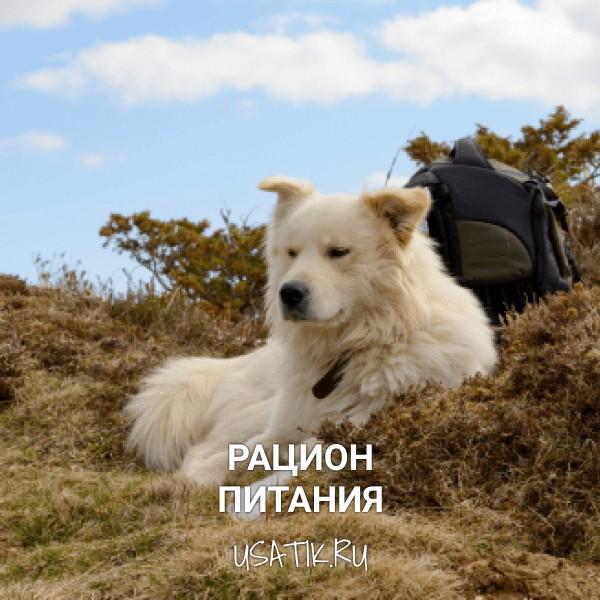 Рацион питания пиренейских горных собак