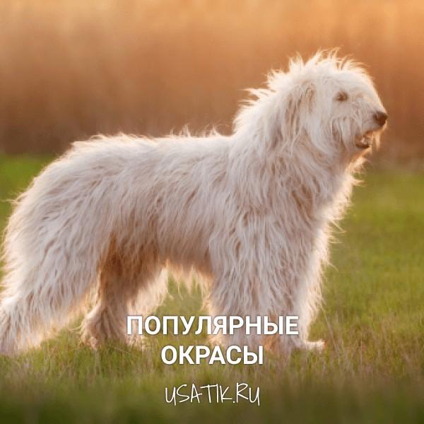 Популярные окрасы южнорусских овчарок