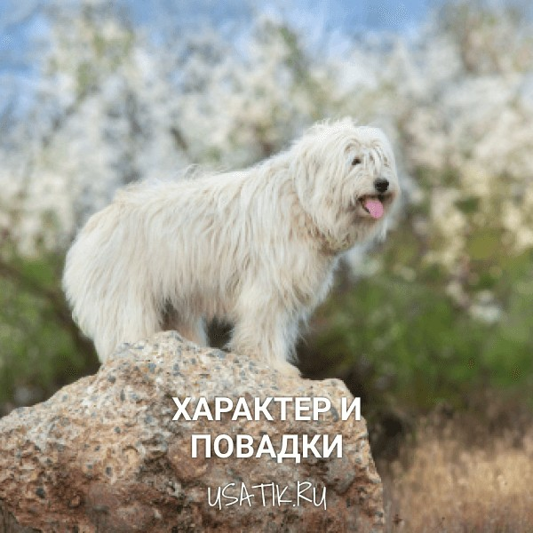 Характер и повадки южнорусских овчарок